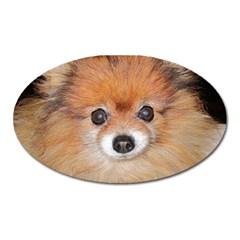 Pomeranian Oval Magnet