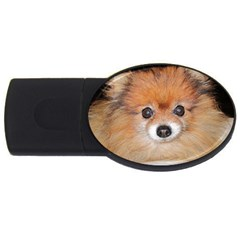 Pomeranian USB Flash Drive Oval (2 GB)