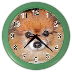 Pomeranian Color Wall Clocks