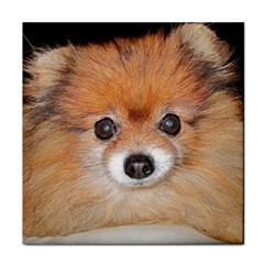 Pomeranian Face Towel