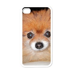 Pomeranian Apple iPhone 4 Case (White)