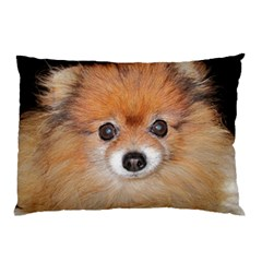 Pomeranian Pillow Case (Two Sides)