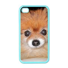 Pomeranian Apple iPhone 4 Case (Color)