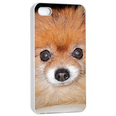 Pomeranian Apple iPhone 4/4s Seamless Case (White)