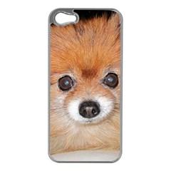 Pomeranian Apple iPhone 5 Case (Silver)