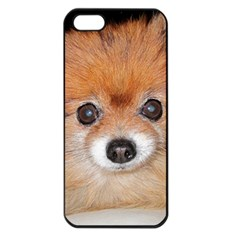 Pomeranian Apple iPhone 5 Seamless Case (Black)
