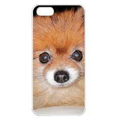 Pomeranian Apple iPhone 5 Seamless Case (White)
