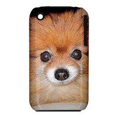 Pomeranian iPhone 3S/3GS