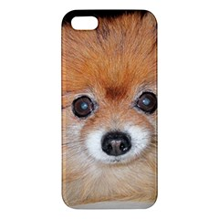 Pomeranian Apple iPhone 5 Premium Hardshell Case