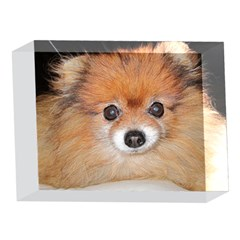 Pomeranian 5 x 7  Acrylic Photo Blocks