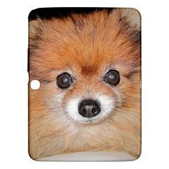 Pomeranian Samsung Galaxy Tab 3 (10.1 ) P5200 Hardshell Case