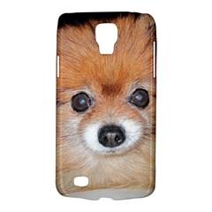 Pomeranian Galaxy S4 Active