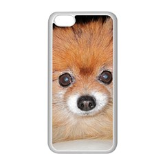 Pomeranian Apple iPhone 5C Seamless Case (White)