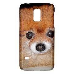 Pomeranian Galaxy S5 Mini