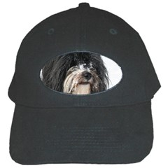Tibet Terrier  Black Cap