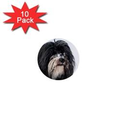 Tibet Terrier  1  Mini Buttons (10 pack)