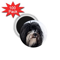 Tibet Terrier  1.75  Magnets (100 pack)