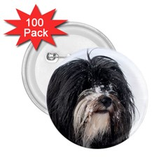 Tibet Terrier  2.25  Buttons (100 pack)