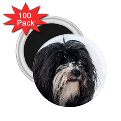 Tibet Terrier  2.25  Magnets (100 pack)
