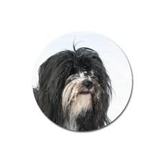Tibet Terrier  Magnet 3  (Round)