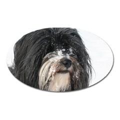 Tibet Terrier  Oval Magnet