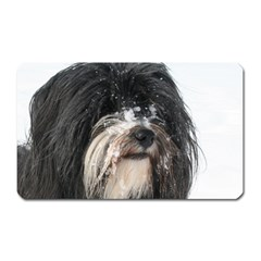 Tibet Terrier  Magnet (Rectangular)