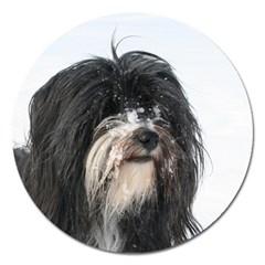 Tibet Terrier  Magnet 5  (Round)