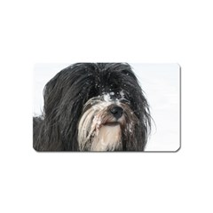 Tibet Terrier  Magnet (Name Card)