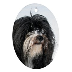 Tibet Terrier  Oval Ornament (Two Sides)