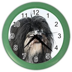 Tibet Terrier  Color Wall Clocks