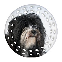 Tibet Terrier  Ornament (Round Filigree)