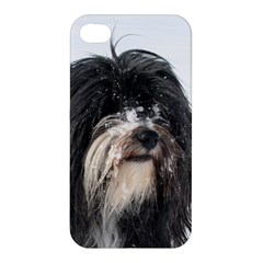 Tibet Terrier  Apple iPhone 4/4S Hardshell Case