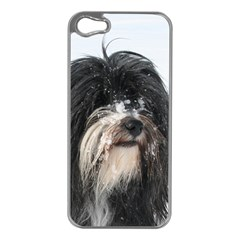 Tibet Terrier  Apple iPhone 5 Case (Silver)