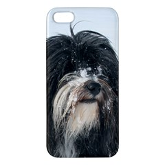 Tibet Terrier  Apple iPhone 5 Premium Hardshell Case