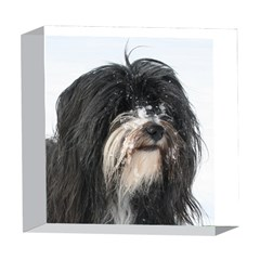 Tibet Terrier  5  x 5  Acrylic Photo Blocks