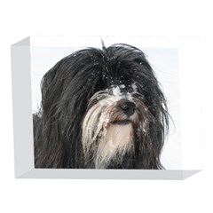 Tibet Terrier  5 x 7  Acrylic Photo Blocks