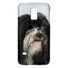 Tibet Terrier  Galaxy S5 Mini