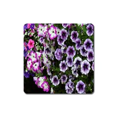 Flowers Blossom Bloom Plant Nature Square Magnet