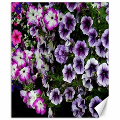 Flowers Blossom Bloom Plant Nature Canvas 8  x 10