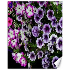 Flowers Blossom Bloom Plant Nature Canvas 11  x 14