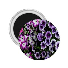 Flowers Blossom Bloom Plant Nature 2.25  Magnets