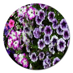 Flowers Blossom Bloom Plant Nature Magnet 5  (Round)