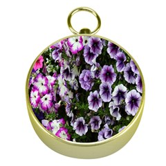 Flowers Blossom Bloom Plant Nature Gold Compasses