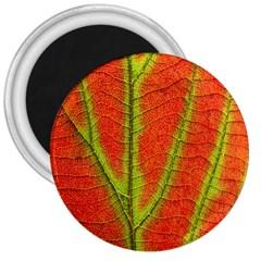 Unique Leaf 3  Magnets
