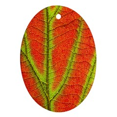 Unique Leaf Oval Ornament (Two Sides)