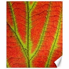 Unique Leaf Canvas 8  x 10