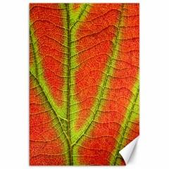 Unique Leaf Canvas 20  x 30