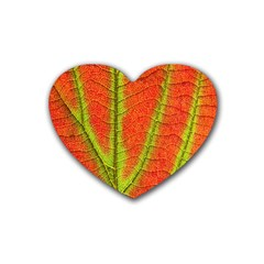 Unique Leaf Heart Coaster (4 pack)