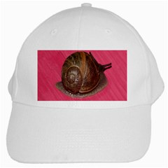 Snail Pink Background White Cap