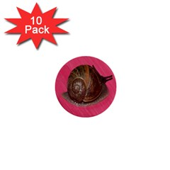 Snail Pink Background 1  Mini Buttons (10 pack)